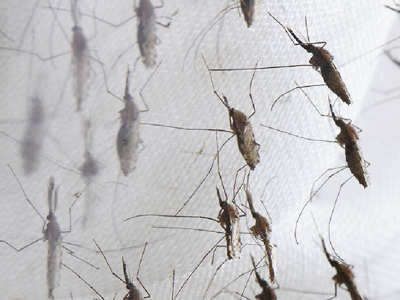 Vecinos de Montornés piden ayuda ante la plaga de mosquitos