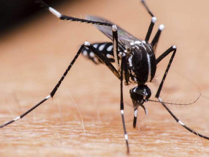 Plaga de mosquitos en Montornes. Ciudadanos indefensos ante políticos y funcionarios prepotentes e insensibles