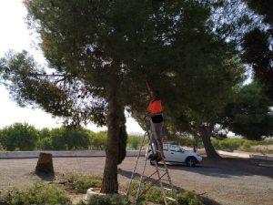Xilxes prepara su cementerio para el Día de Todos los Santos